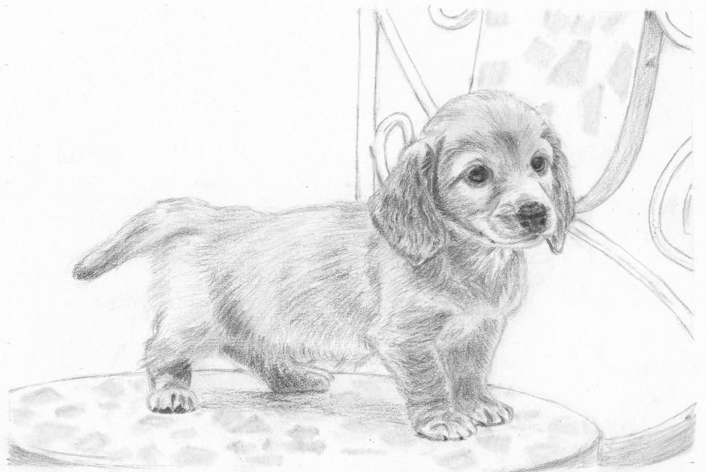 【ピリカアートスクール】犬のデッサン 添削アドバイス